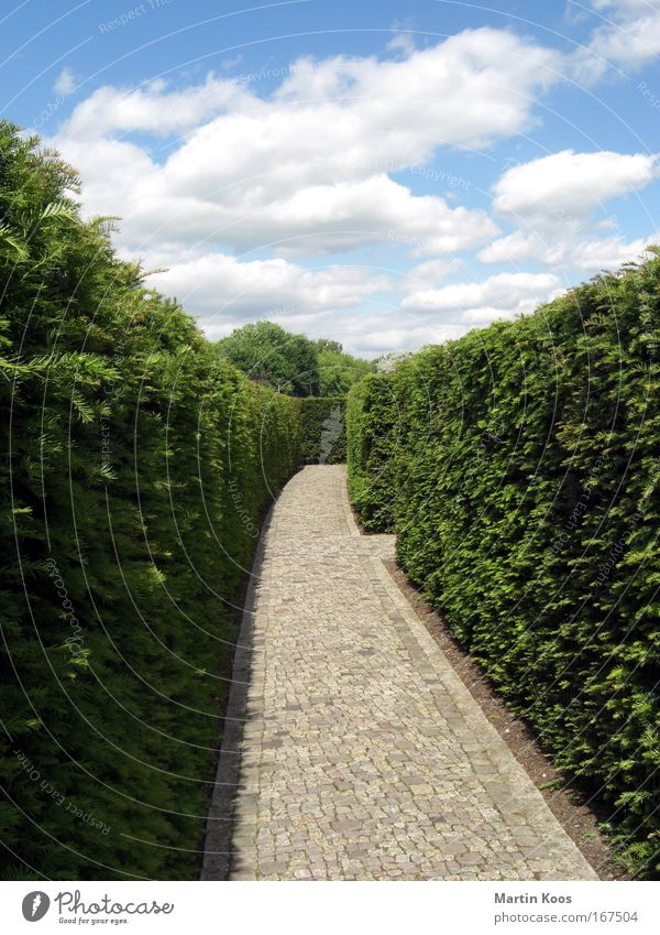 Sky Lanes & trails Park Perspective Future Bushes Belief Creepy Castle Discover Brave Stress Claustrophobia Fear of the future Effort Career