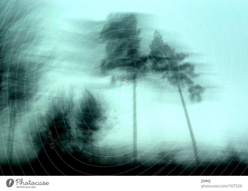 speed Subdued colour Exterior shot Experimental Abstract Deserted Evening Silhouette Long exposure Environment Nature Landscape Plant Sky Cloudless sky Tree
