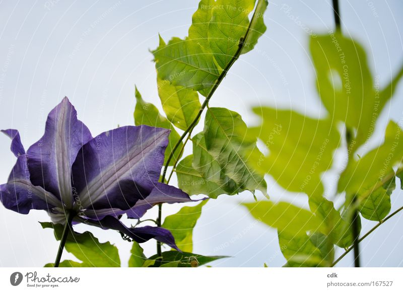 entwine into the sky Colour photo Exterior shot Deserted Day Shallow depth of field Nature Plant Air Sky Cloudless sky Sun Spring Summer Beautiful weather