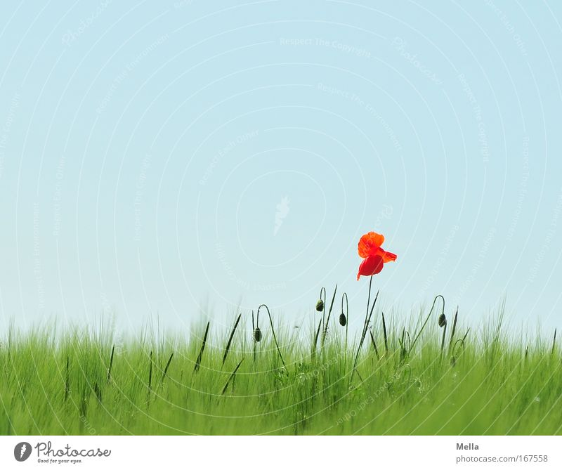 Nature Beautiful Flower Green Blue Plant Red Summer Colour Meadow Blossom Spring Landscape Field Environment Growth