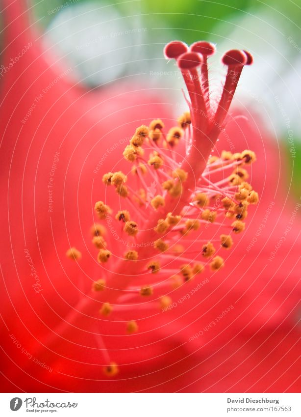 Nature Beautiful Summer Plant Red Flower Blossom Exceptional Pink Stalk Fragrance Exotic Pistil Pollen Wild plant Nectar