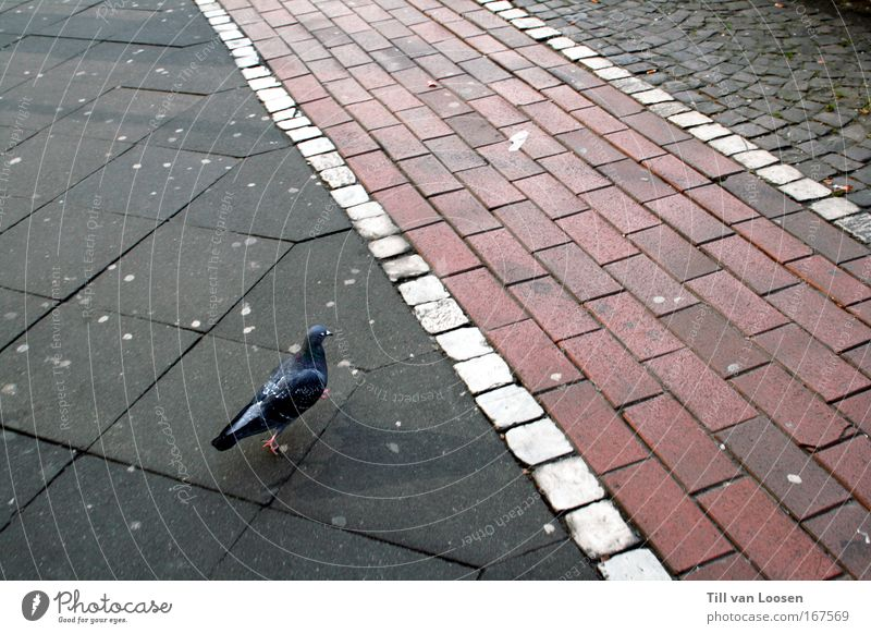 Walk The Line Colour photo Exterior shot Copy Space right Day Bird's-eye view Road traffic Pedestrian Street Animal Pigeon 1 Concrete Driving Feeding Walking