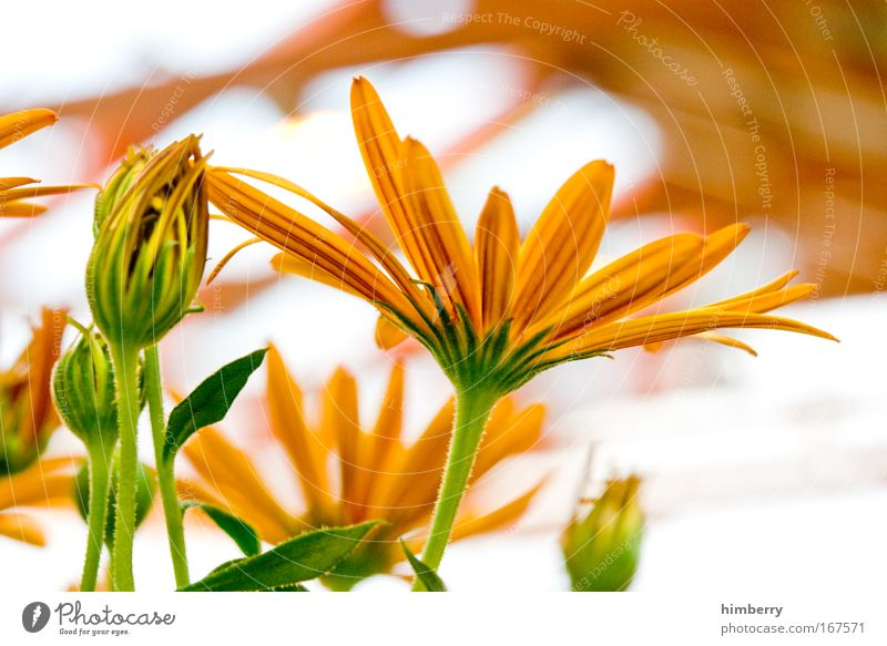 Nature Beautiful Flower Plant Calm Yellow Life Relaxation Style Blossom Park Contentment Design Gold Fresh Esthetic