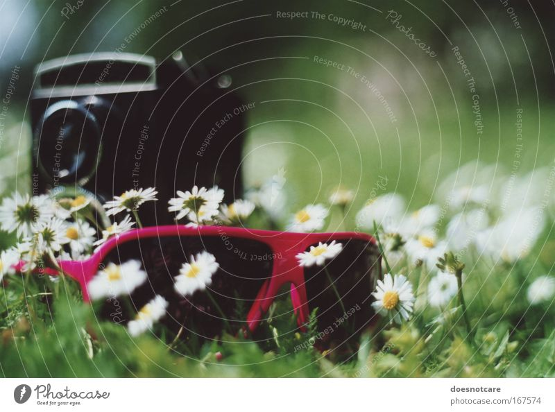 self. Lifestyle Style Summer Plant Flower Daisy Meadow Accessory Sunglasses Blossoming Relaxation Cool (slang) Fragrance Hip & trendy Uniqueness Green Pink