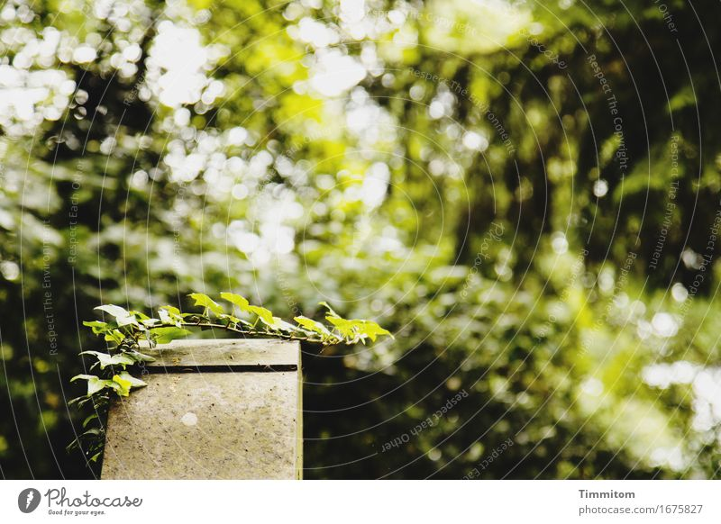 God arable land. Plant Tree Bushes Ivy Stone Growth Natural Green Grief Death Hope Cemetery Tombstone Colour photo Exterior shot Deserted Day Shadow Contrast