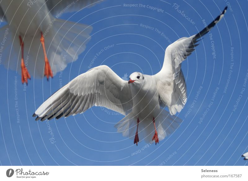 instant Colour photo Exterior shot Day Animal portrait Forward Wild animal Bird Animal face Wing Seagull 2 Flying Free Blue White