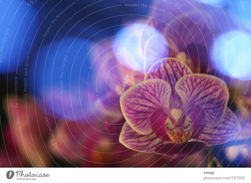 Nature Plant Spring Dream Flower Exotic Orchid