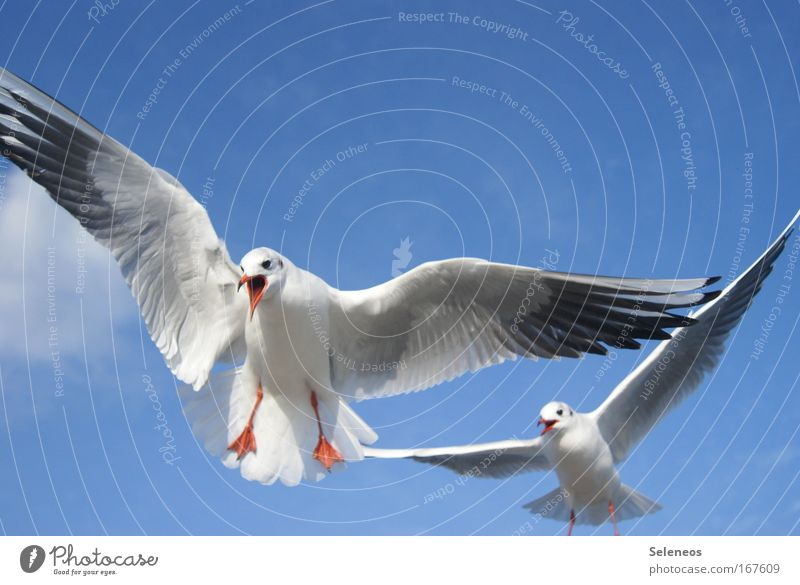 White Blue Animal Bird Flying Scream Wild animal Seagull