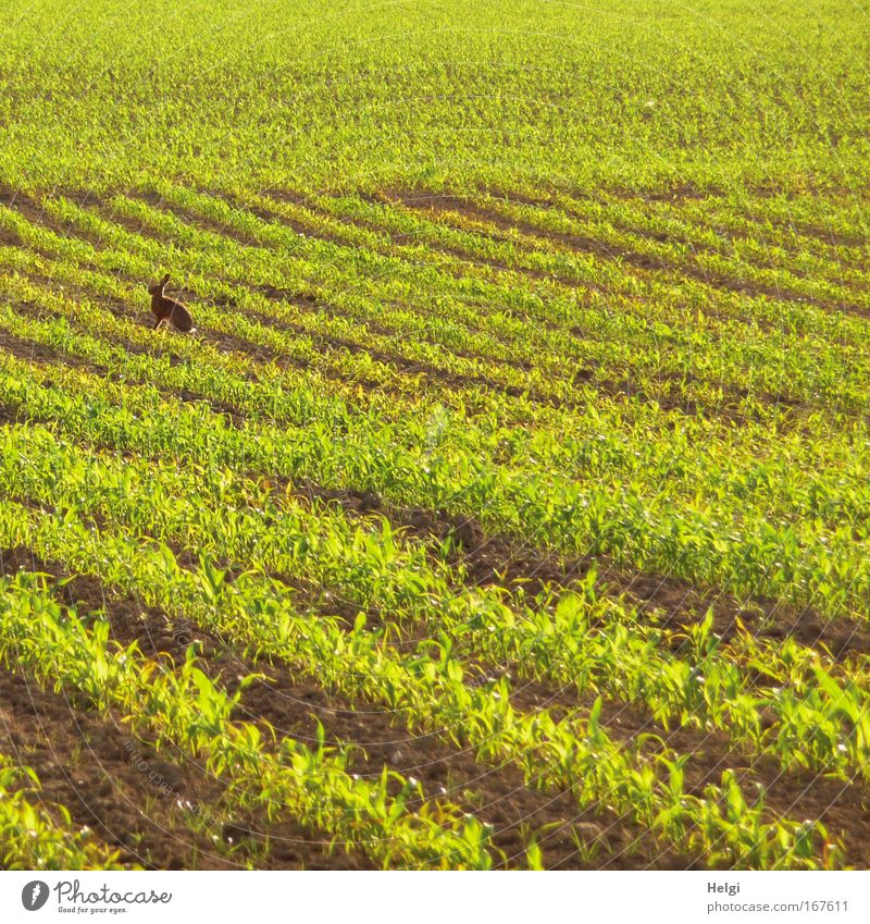 Nature Green Plant Calm Loneliness Animal Life Spring Landscape Brown Field Small Environment Speed Sit Esthetic
