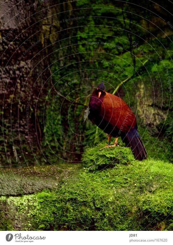 Nature Green Red Animal Bird Rock Esthetic Wing Zoo Listening Wild animal Exotic Pride Peaceful Plumed