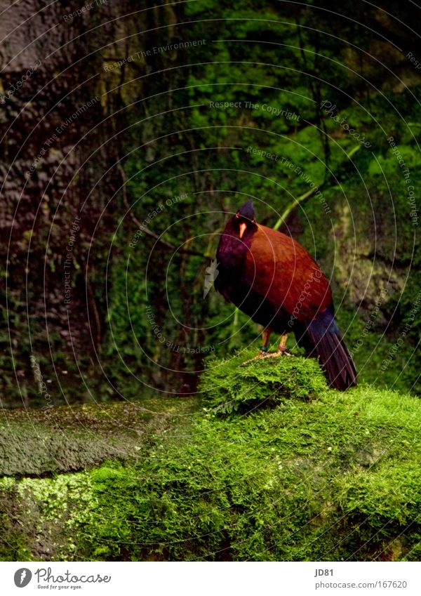What are you looking at? Colour photo Multicoloured Exterior shot Day Contrast Looking into the camera Zoo Nature Exotic Rock Animal Wild animal Bird Wing 1