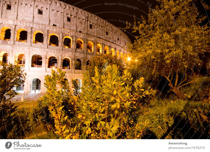 il colosseo Architecture Environment Nature Landscape Plant Tree Bushes Park Rome Italy Town Capital city House (Residential Structure) Ruin Manmade structures
