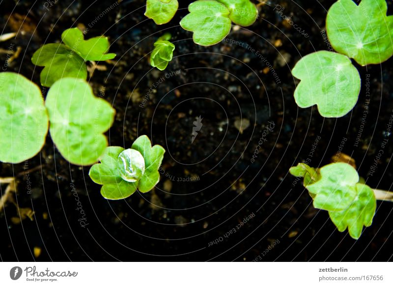 dewdrop macro test Dew Drops of water Water Rain Rainwater Precipitation Earth Plant slips Rung Spring Balcony Flowerpot Sowing Shoot Garden Nature