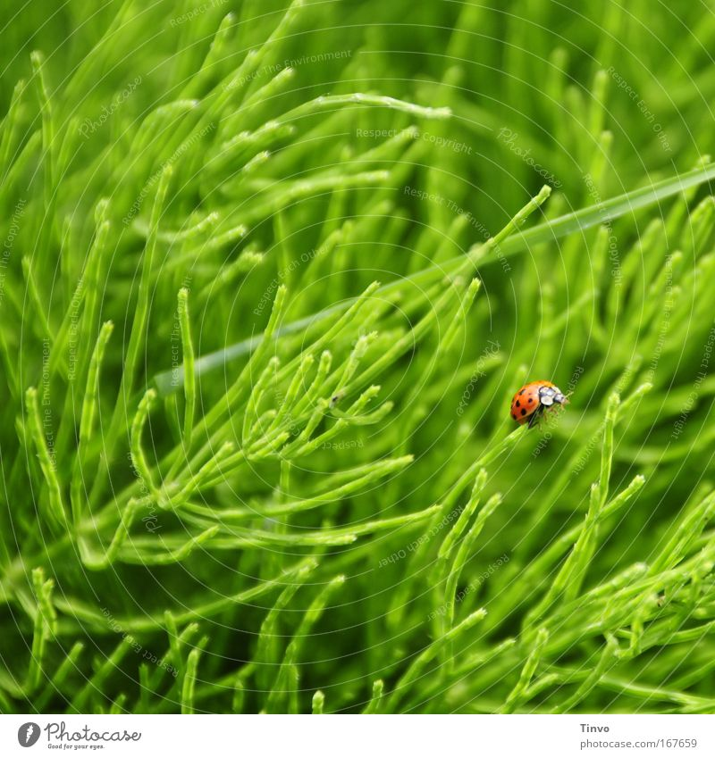 Nature Green Red Loneliness Animal Life Meadow Grass Spring Happy Small Hope Climbing Insect Herbs and spices Ladybird