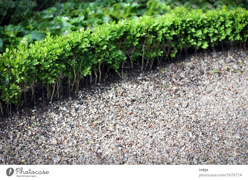 cemetery green Summer Plant Tree Foliage plant Box tree Hedge Garden Park Cemetery Deserted Gravel Stone Growth Boundary Wayside Ledger Colour photo
