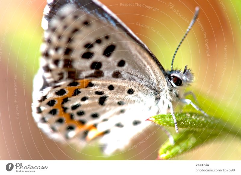 Nature Beautiful White Sun Flower Plant Summer Animal Colour Grass Spring Orange Environment Sit Esthetic Wing