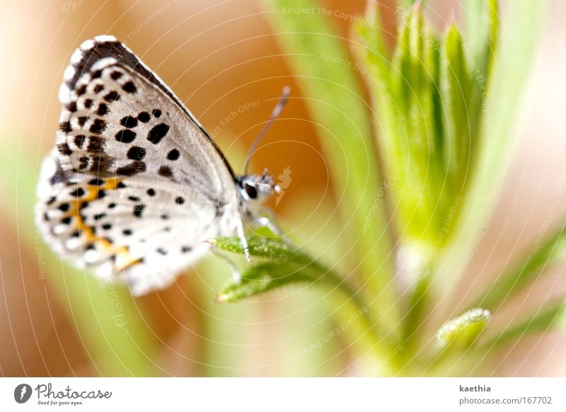 the other butterfly effect Colour photo Exterior shot Macro (Extreme close-up) Day Sunlight Shallow depth of field Environment Nature Animal Summer Plant Grass