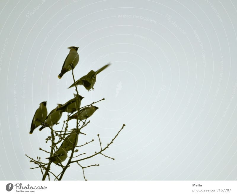 Nature Sky Tree Plant Winter Animal Autumn Movement Gray Air Together Bird Environment Flying Sit Gloomy