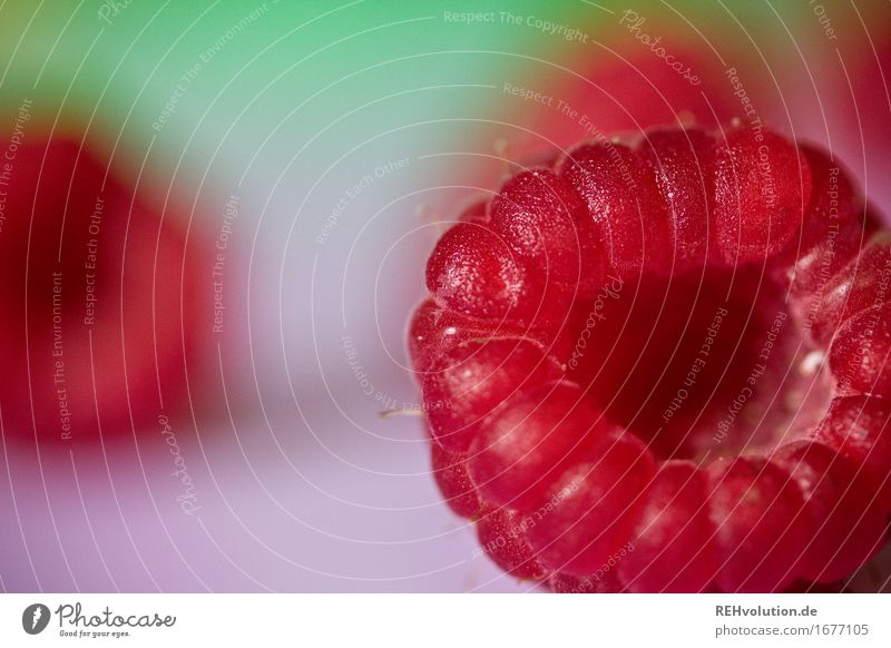 raspberry Food Fruit Nutrition Vegetarian diet Healthy Healthy Eating Lie Delicious Red Raspberry Berries Fruity Colour photo Multicoloured Interior shot Detail