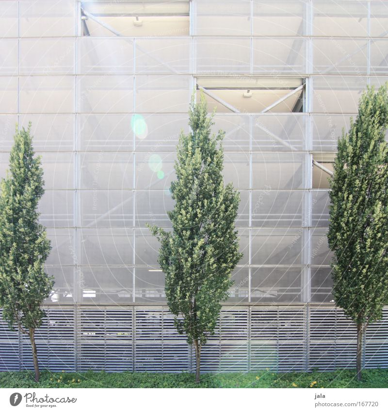 White Tree Green Plant Wall (building) Spring Wall (barrier) Building Bright Architecture Facade Manmade structures Ivy Foliage plant