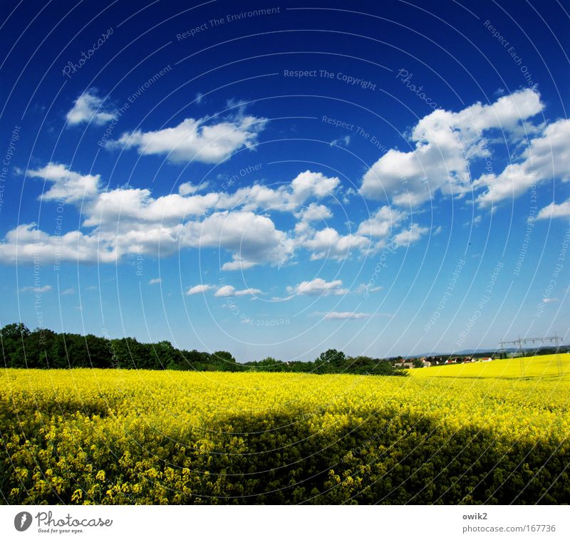 Sky Nature Plant Blue Landscape Clouds Forest Environment Yellow Blossom Horizon Field Energy industry Growth Illuminate Idyll