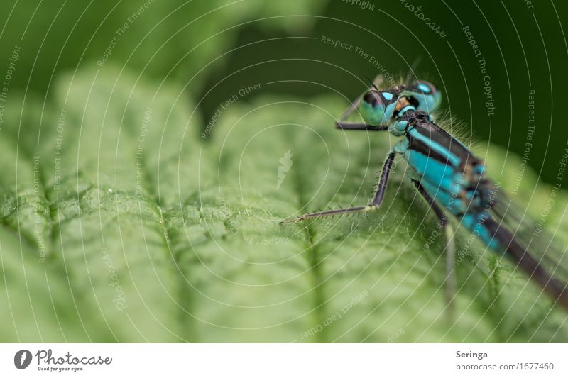 Portrait from behind Plant Leaf Garden Park Meadow Forest Animal Wild animal Fly Animal face Wing 1 Flying Dragonfly wing Dragonfly wings Demoiselles