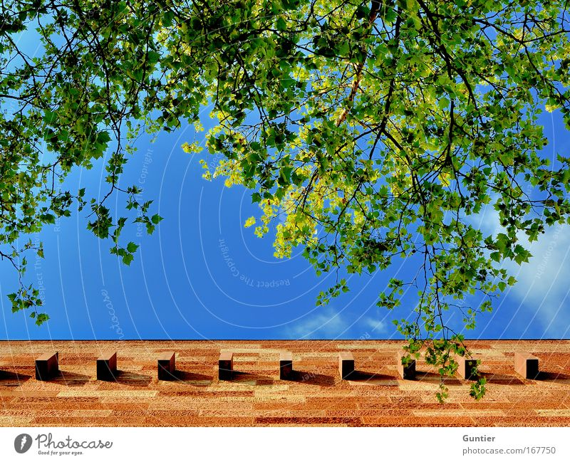 Blue Green Tree Plant Red Summer Loneliness Yellow Wall (building) Architecture Building Wall (barrier) Weather Brown Facade
