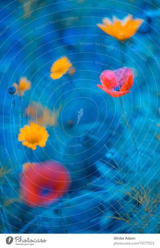 Nature Blue Plant Summer Flower Leaf Interior design Blossom Meadow Art Garden Design Park Decoration Card Well-being
