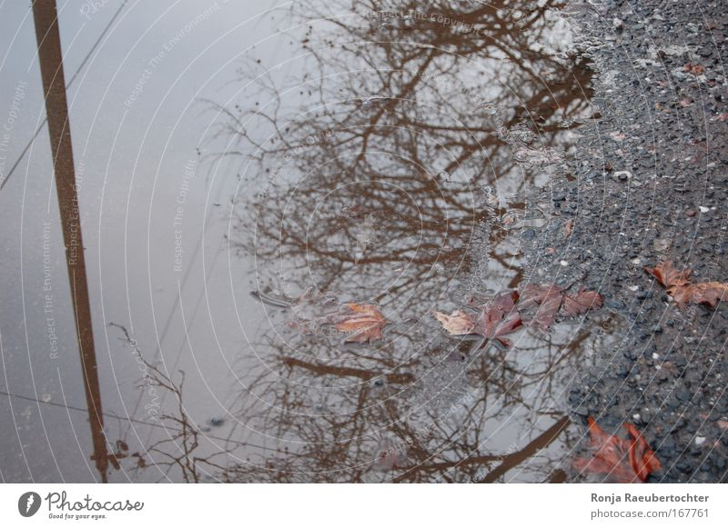 autumn Colour photo Exterior shot Deserted Day Reflection Bird's-eye view Cable Nature Plant Autumn Bad weather Rain Leaf Outskirts Concrete Water Old Cold