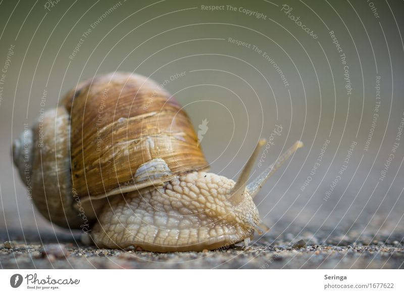 watershed Animal Snail Animal face 1 Slimy Beautiful Snail slime Snail shell Vineyard snail Large garden snail shell Slowly Colour photo Subdued colour