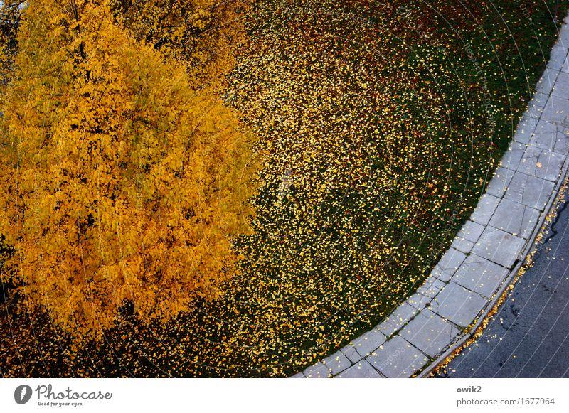 colour photograph Environment Nature Landscape Autumn Beautiful weather Tree Grass Leaf Street Sidewalk Paving tiles Asphalt Blue Green Orange Autumn leaves