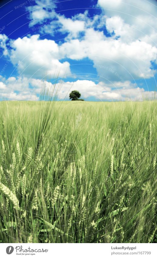 Nature Beautiful Sky White Tree Green Blue Plant Summer Clouds Loneliness Colour Above Grass Freedom Landscape