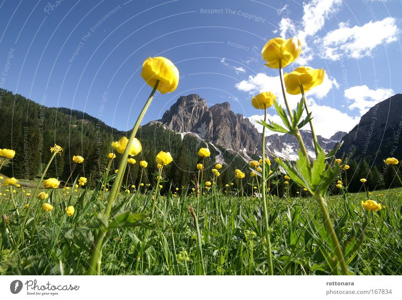 Nature Flower Green Blue Plant Calm Yellow Mountain Landscape Environment Romance Authentic Simple Leisure and hobbies Natural