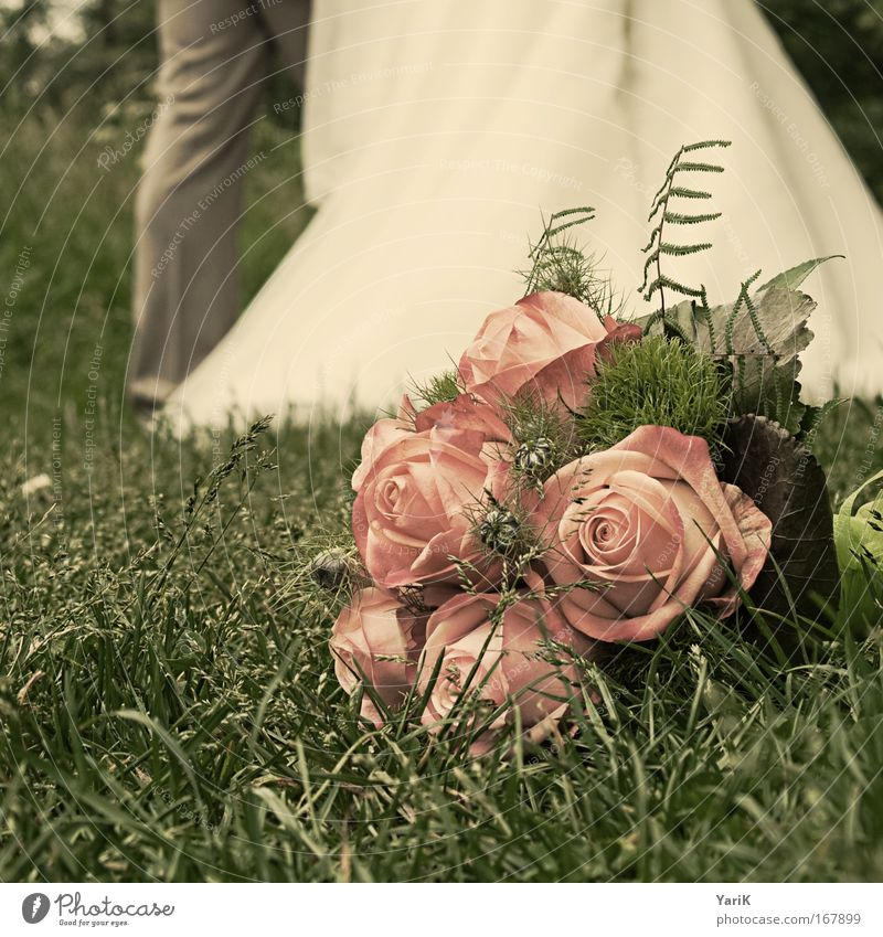 wedding anniversary Colour photo Subdued colour Exterior shot Day Blur Worm's-eye view Feasts & Celebrations Wedding Flower Grass Rose Meadow Lie Esthetic