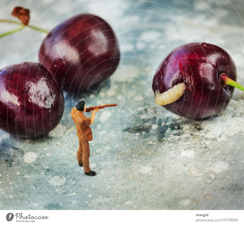 Miniwelten - There's the worm in there! Food Fruit Nutrition Organic produce Vegetarian diet Hunting Gardening Services Human being Masculine Man Adults 1