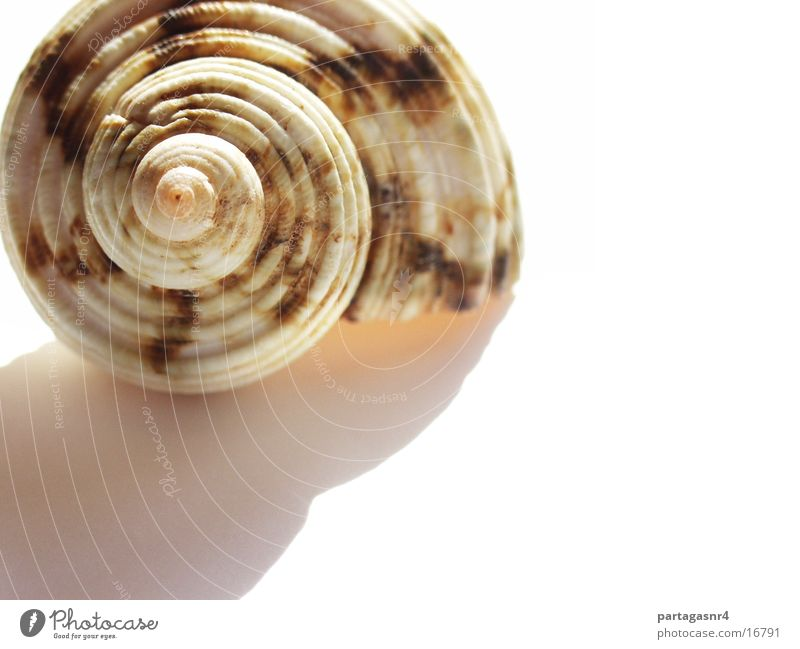 snail shell Mollusk Snail Macro (Extreme close-up)