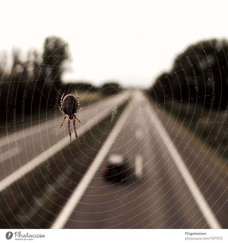 Loneliness Landscape Street Sadness Movement Car Fear Transport Observe Bridge Stress Traffic infrastructure Vehicle Highway Concern Motoring