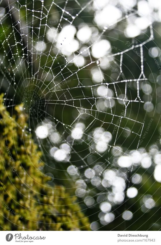 Nature Water Green Summer Environment Wet Drops of water Damp Dew Spider's web Net Cobwebby Reticular