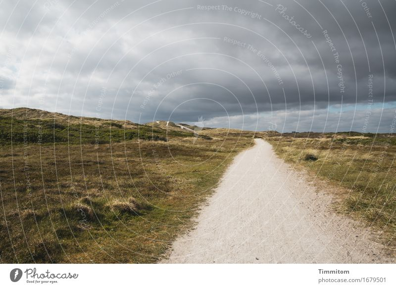 Something's coming! Vacation & Travel Environment Nature Landscape Sky Clouds Dune Marram grass Denmark Lanes & trails Threat Gray Green Emotions Far-off places