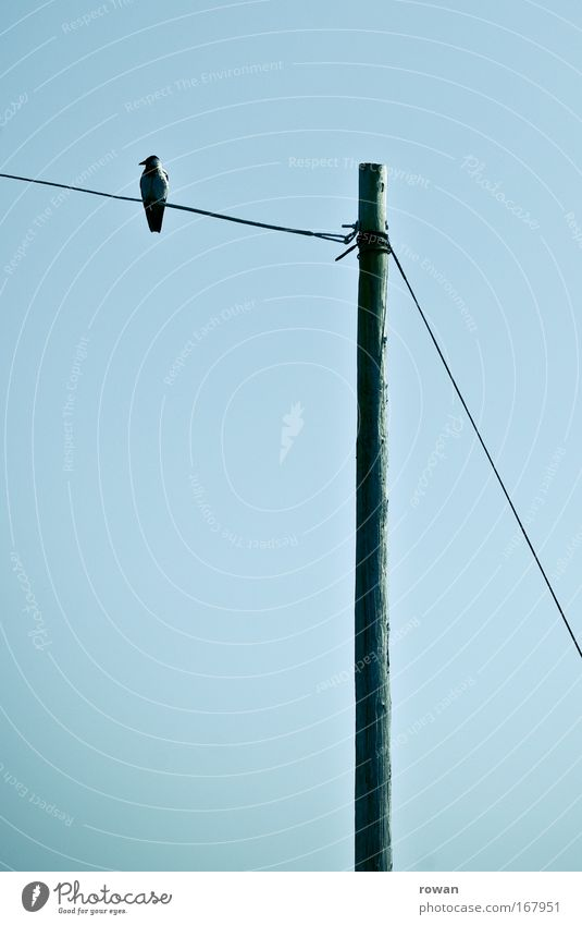 Calm Animal Dark Sadness Think Contentment Bird Wait Sit Gloomy Cable Observe Creepy Serene Electricity pylon Patient