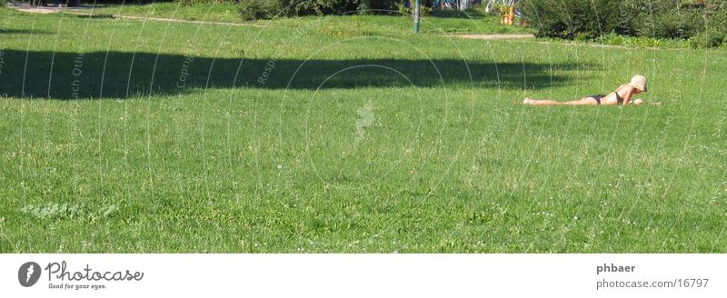 Prone position in the Herrngarten Woman Reading Bikini Darmstadt Park Green Plant Grass Meadow Light Free space Hat master garden Nature Lawn Relaxation Sun