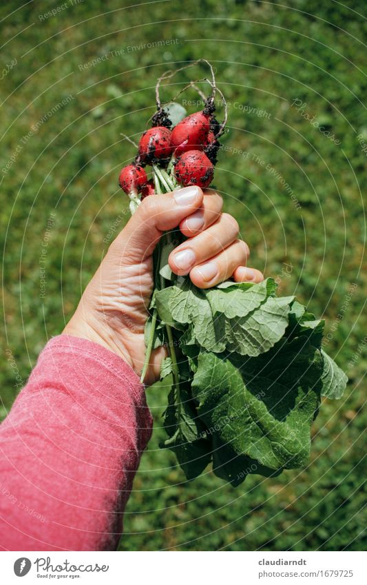 Nature Plant Summer Green Hand Red Environment Healthy Garden Food Fresh Nutrition Arm Fingers To hold on Delicious