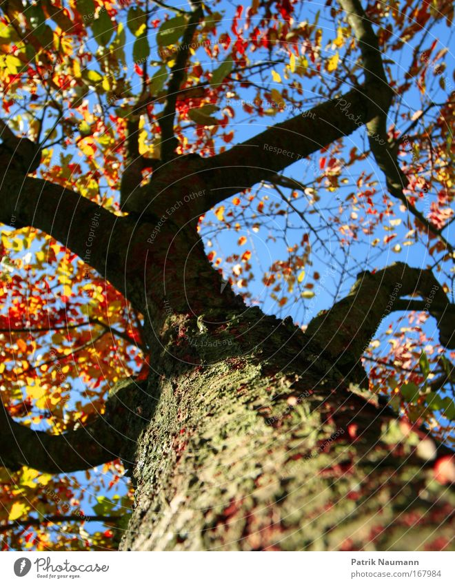 Nature Sky Tree Blue Red Summer Black Yellow Colour Forest Autumn Above Large Natural Blossoming