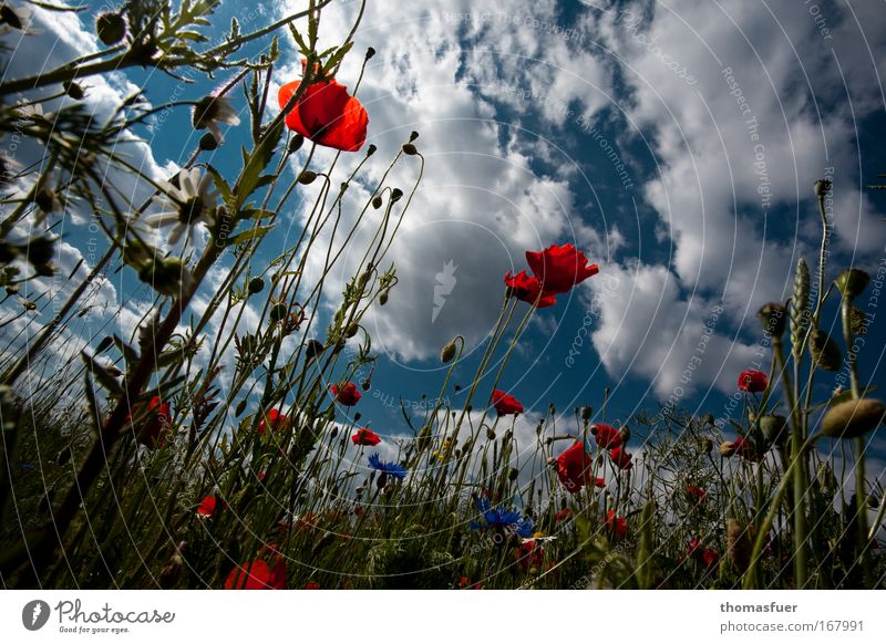 SUMMER!!!!! Colour photo Multicoloured Exterior shot Deserted Copy Space top Day Sunlight Worm's-eye view Nature Sky Clouds Summer Beautiful weather Flower