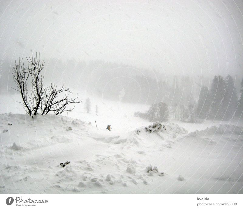 Nature White Tree Winter Calm Loneliness Relaxation Cold Snow Freedom Landscape Snowfall Hiking Esthetic Bushes Infinity