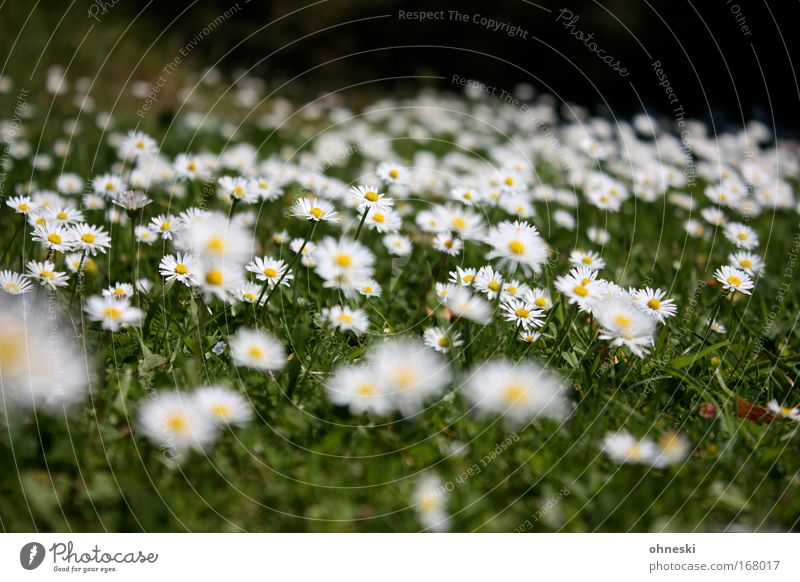daisy alarm Pattern Blur Environment Nature Plant Summer Beautiful weather Warmth Flower Blossom Garden Meadow Fragrance Fresh Infinity Soft Yellow Green