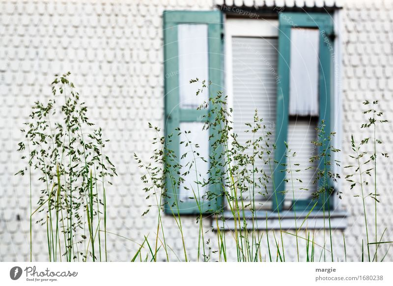 AST 9 | Front garden: blades of grass in front of a mysterious half-open window Lifestyle Living or residing Flat (apartment) House (Residential Structure)