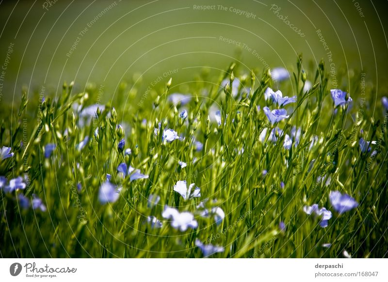 Nature Flower Green Plant Blossom Grass Warmth Field Bushes Violet Warm-heartedness Beautiful weather