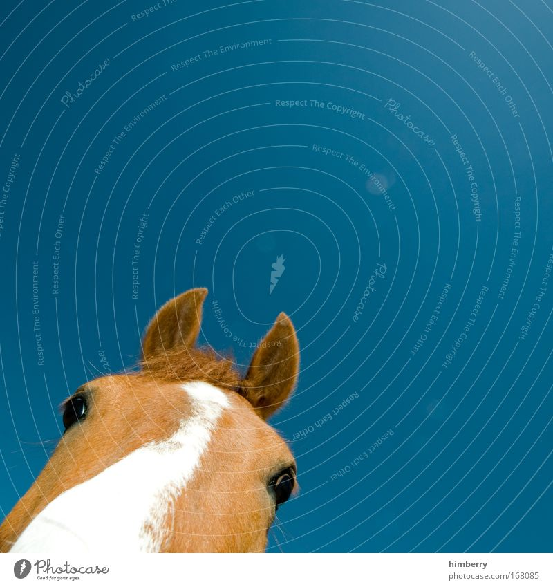 Beautiful Sky White Blue Animal Life Emotions Happy Contentment Brown Horse Happiness Esthetic Cool (slang) Near Simple