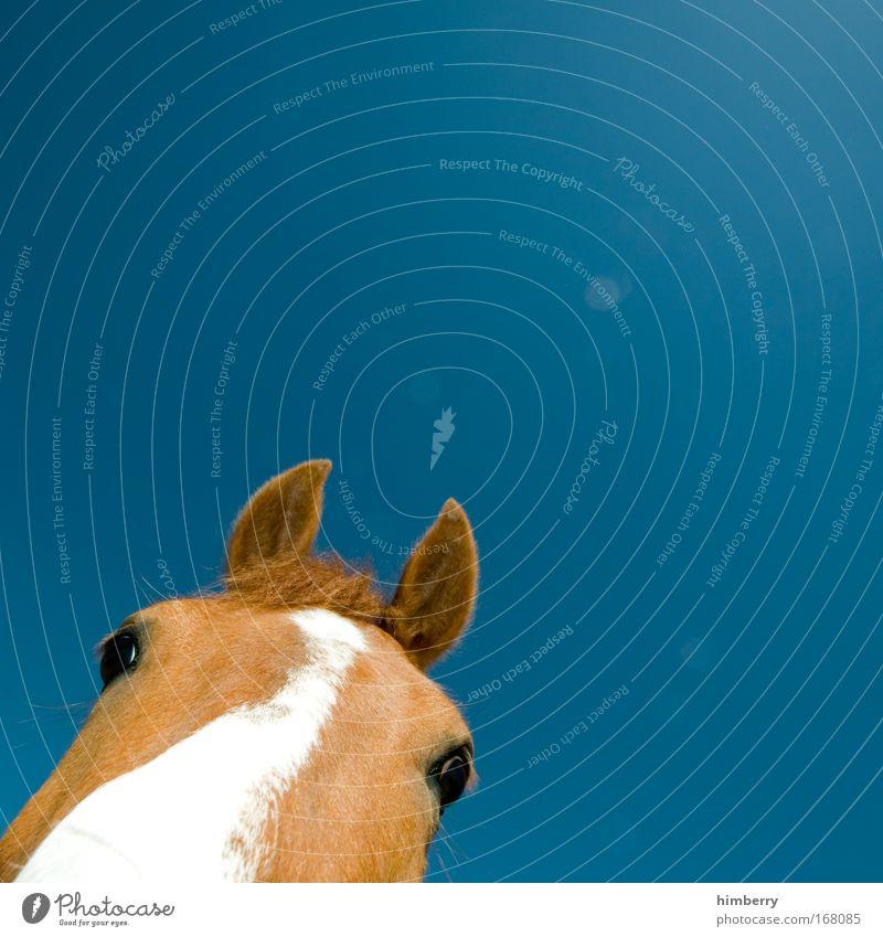 pony cut Colour photo Multicoloured Exterior shot Close-up Detail Copy Space left Copy Space right Copy Space top Copy Space bottom Copy Space middle Day